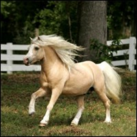 Breezy Palomino has the wind in her hair