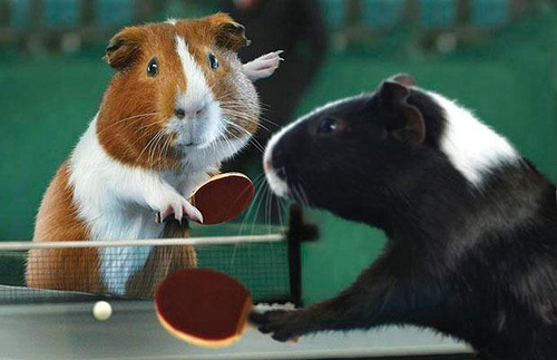 hamsters-playing-pingpong-by-its-just-jack-on-flickr